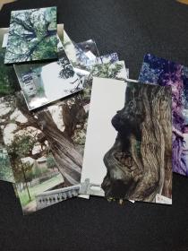 古树  老照片  110张左右  大概都在95、96期间拍摄,河南古树,背面都有名称
