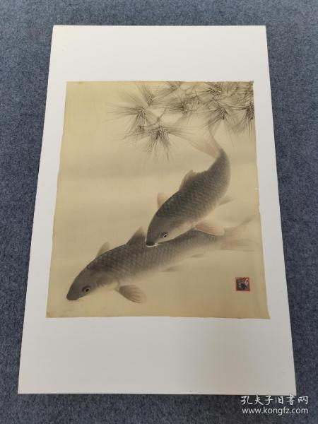 绢本工笔老画,松鲤图。画工细致,栩栩如生的感觉!松鲤传统寓意长寿富贵。尺寸43/36公分。品相不错!背面白卡纸是衬底,不是和画一体的。