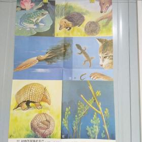 小学课本教学挂图 22动物怎样保护自己 全套85幅