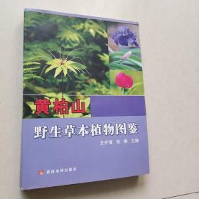 黄柏山野生草本植物图鉴