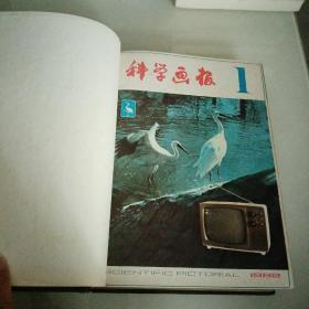 科学画报1982合订本
