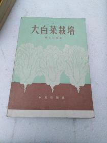 大白菜栽培