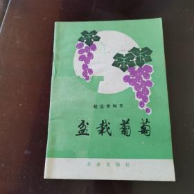盆栽葡萄 正版老版