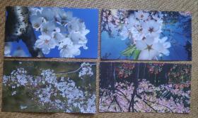 《顾村公园    城市中的绿野》(上海市樱花最佳赏樱地)玉兰花邮资明信片样张。一套十枚。江苏省邮电印刷厂资料印样。
