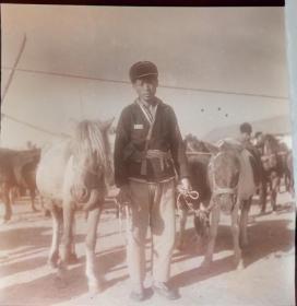 1964年底片两张,临泉县单桥公社发展牲畜