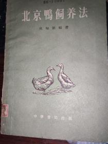 北京鸭饲养法