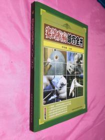 赛鸽疾病诊疗全书(一版一印)
