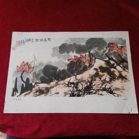8开文革前后老画片(印刷品):《荷塘烟波》李苦禅作