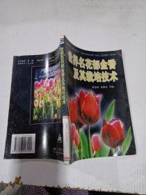 世界名花郁金香及其栽培技术,