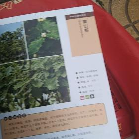 500种常见园林植物识别图鉴:彩图典藏版