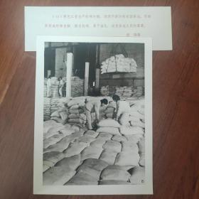 1982年,黑龙江用甜菜生产的绵白糖,深受全国人民喜爱