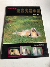 玩赏犬在中国·投资与经营