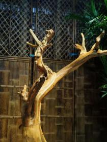 崖柏,造型别致,木质细腻光滑,欣赏价值高
