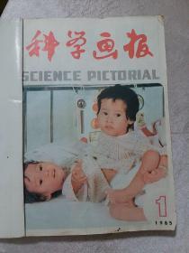 科学画报,1985年全年12期合订本