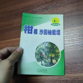 柑橘 沙田柚栽培