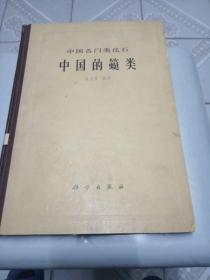中国各门类化石——中国的䗴类