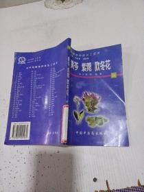 黄苓 紫菀 款冬花