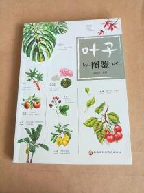 叶子图鉴(本书将带你鉴赏各种各样的植物叶子!)