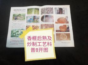 香榧后熟及炒制工艺科普