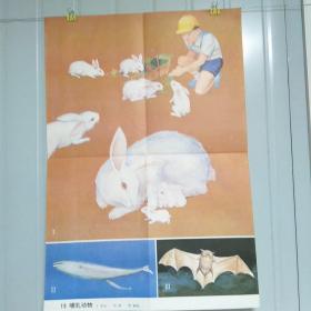 小学课本教学挂图 19 哺乳动物 全套85幅