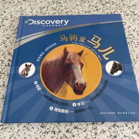 探索频道-动物变变变:马驹变马儿