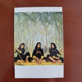 文革老明信片:《稻香蔗甜》,冯玉琪创作,人民美术出版社出版。