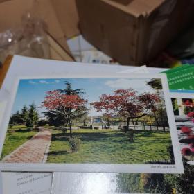 中国邮政明信片:辽宁师范大学-校园小路