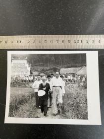 1959年毛主席回韶山老家视察和他的私塾先生一起在田间合影老照片