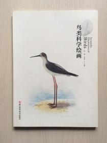 鸟类科学绘画