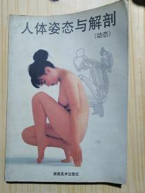 人体姿态与解剖