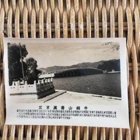 老照片 北京万寿山铜牛