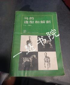 马的造型和解剖