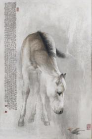 黄今,可合影,  四尺 马