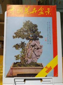 中国花卉盆景1986年第5期