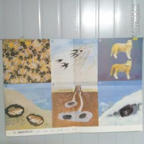 小学课本教学挂图 21动物怎样过冬 全套85幅