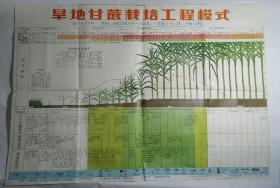 旱地甘蔗栽培工程模式