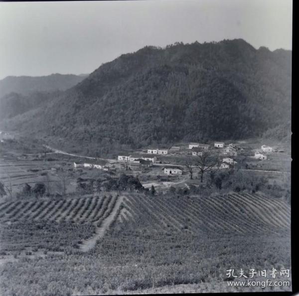 1975年底片两种:太平县封山育林