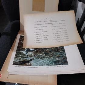 加拿大摄影艺术【1979年一版一印/十副作品加一张目录11张活页全】完整不缺