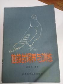 信鸽的饲养与训练