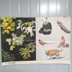 小学课本教学挂图 13 珍贵的动植物 全套85幅
