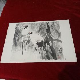 8开文革前后老画片(印刷品):《仙鹤》王子武作
