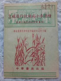 《怎样进行抗锈病小麦选种》 农业生产技术浅说 第八号 1952年12月