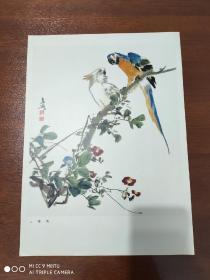 画片《鹦鹉》王雪涛    8开活页  35.5-26厘米