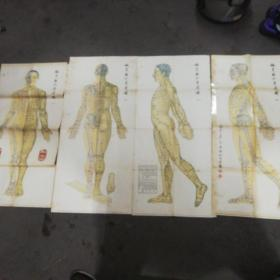 """老版针灸图:针灸取穴参考图""""1956年出版""""一套四张 赠送《实用针灸解剖挂图中文版说明书》上海中医药大学出版社"""