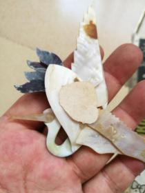 精美的贝壳雕仙鹤
