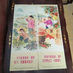 中国粮油食品进出口总公司辽宁省分公司赠送的张贴画两幅:大力采集蕨菜,增产好苹果出口为国争光。单幅尺寸72/26公分。
