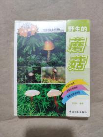 野生的蘑菇