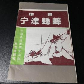 中国宁津蟋蟀