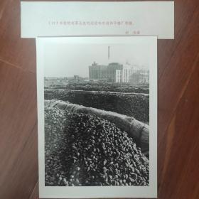 1982年,丰收的甜菜运往黑龙江哈尔滨和平糖厂制糖