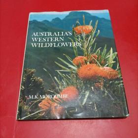 australia's western wildflowers   澳大利亚西部的野花